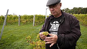 Fynske vinproducenter kæmper: - Vi har haft et frygteligt forår