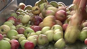 En 35 år lang efterårstradition: Carl Åge bytter altid sine æbler til most